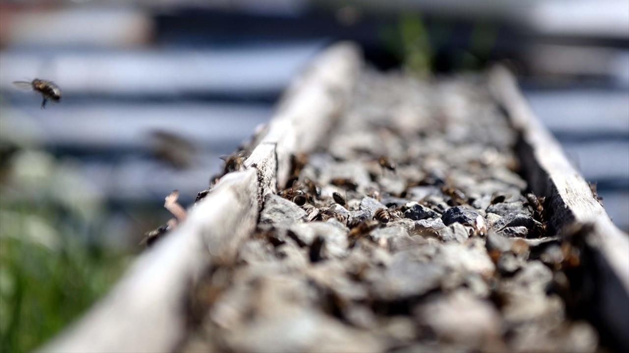 Çiçek balını kuraklık vurdu: Üretici destek istiyor