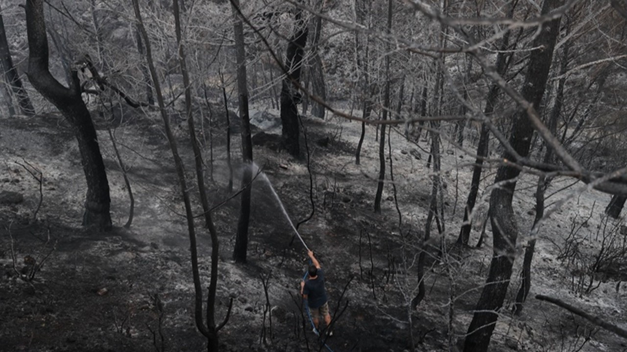 Muğla'da 55 bin 221 hektar alan yandı