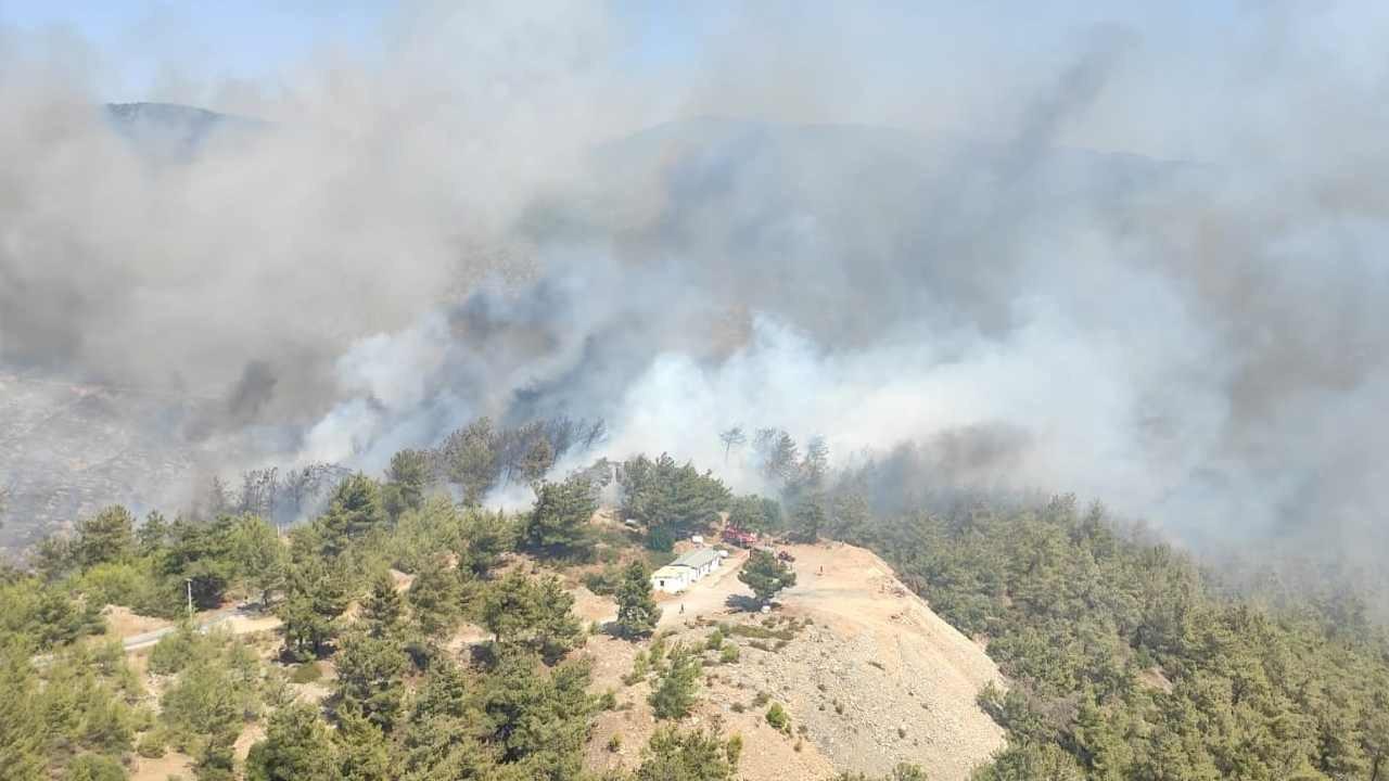 Bodrum ve Milas'ta orman yangını çıktı