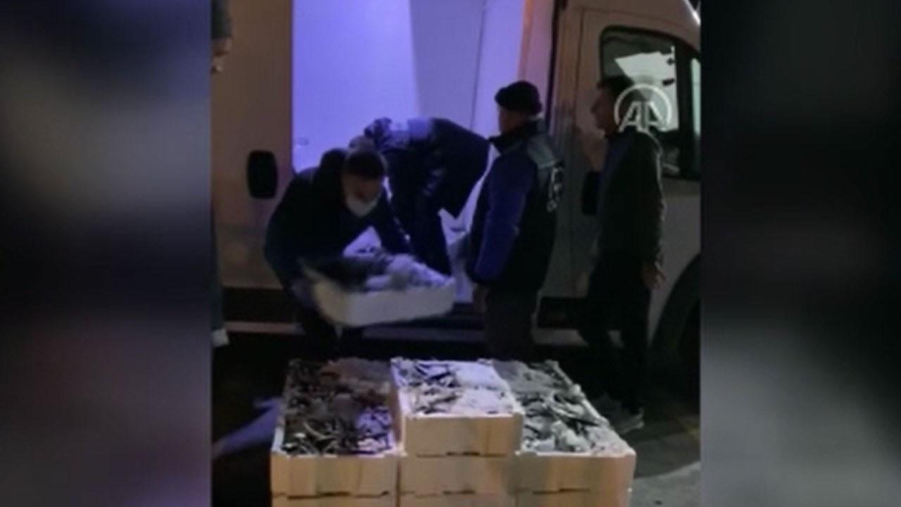 Beylikdüzü'nde 12 ton küçük boy balığa 77 bin 448 lira ceza