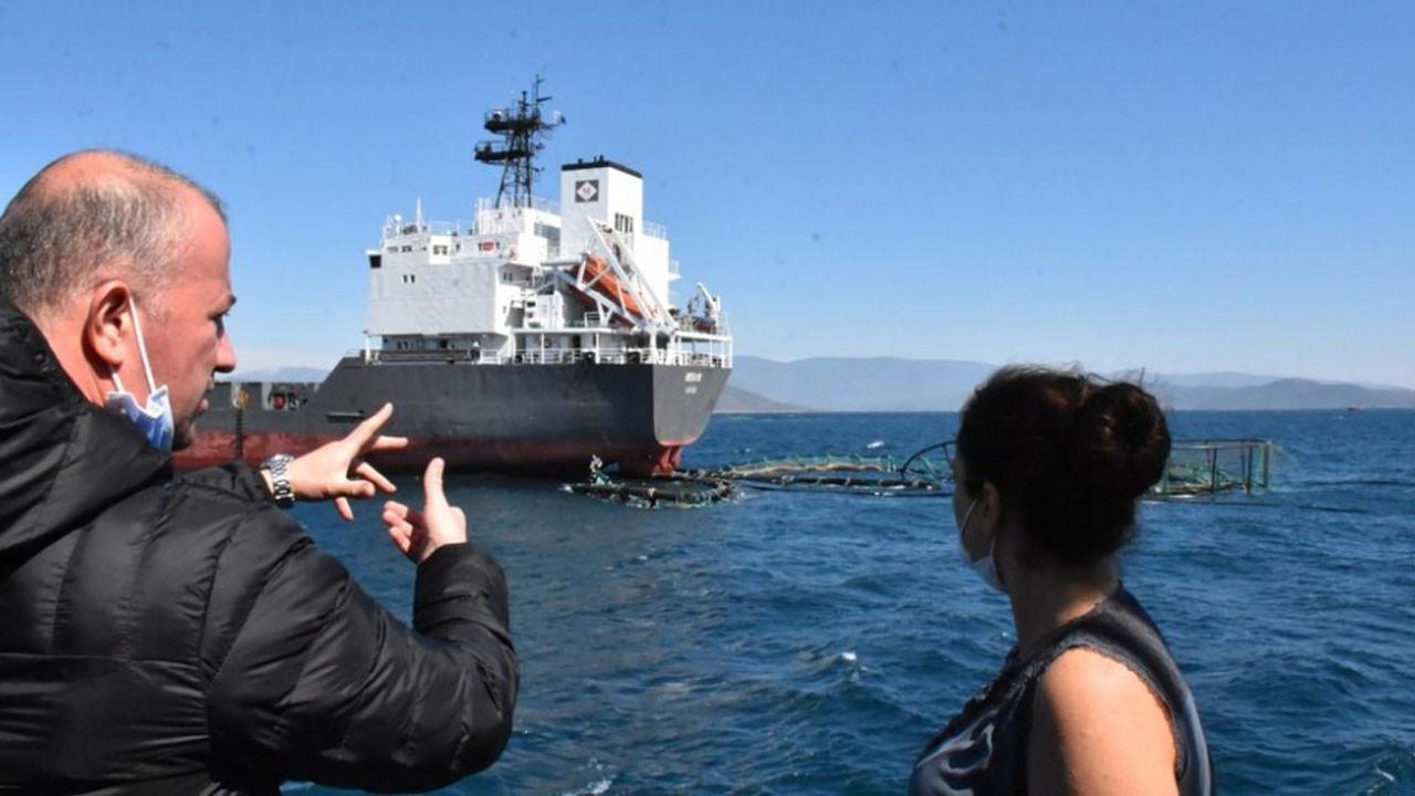 Yük gemisi havuzu yırttı binlerce balık kaçtı