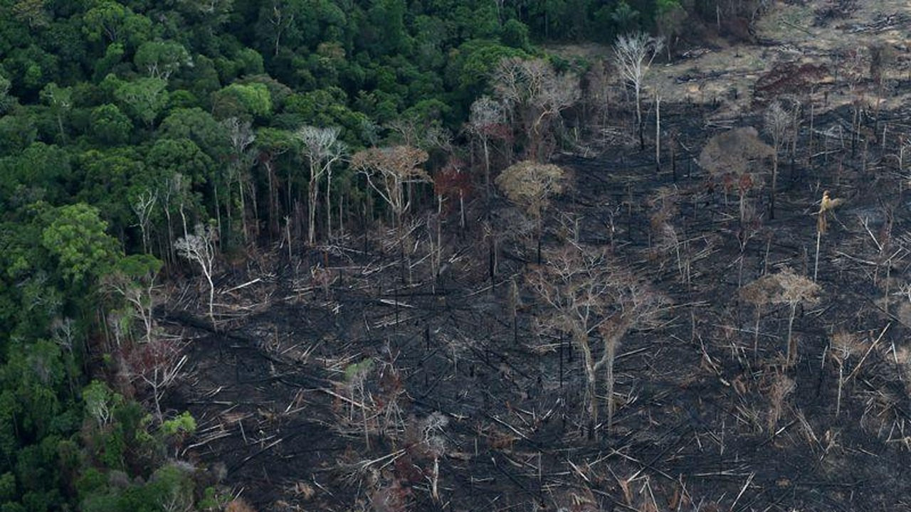 Facebook kendi üzerinden Amazon Ormanları'nda arazi satışını engelledi