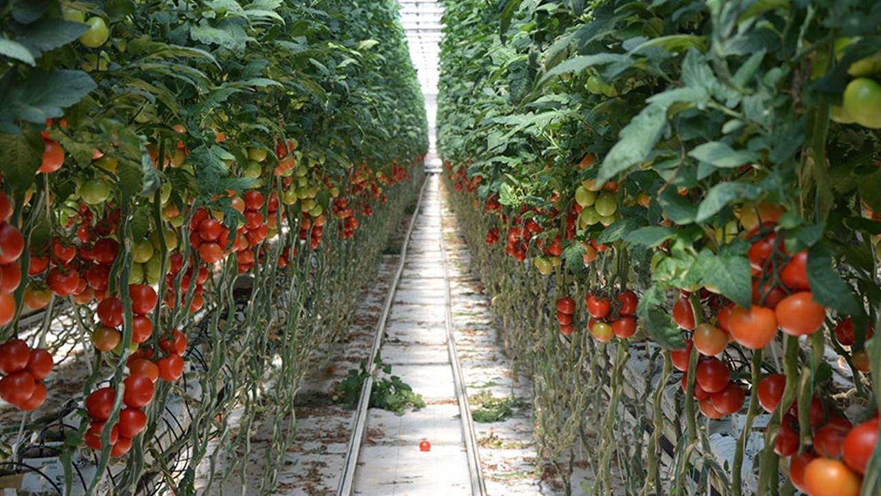 Bim, domates şirketi satın aldı