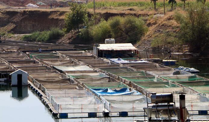 Denizi yok, 15 ülkeye balık ihraç ediyor