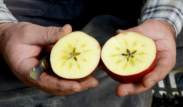 Kırmızı yıldız elması pazar arıyor