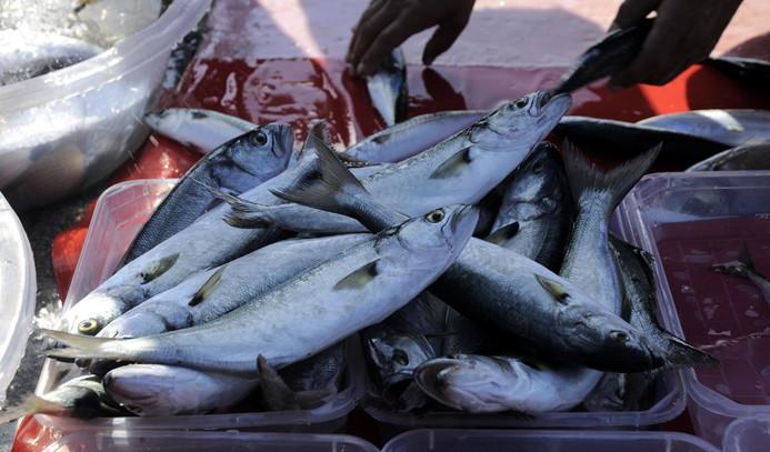 Balıkçılar lüferden de umutlu