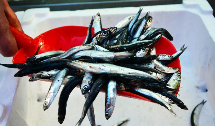 Türkiye'de avlanan her 3 balıktan biri hamsi