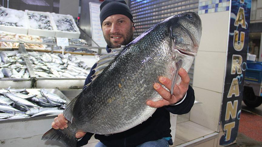 Karadeniz'de 8 kiloluk levrek yakalandı