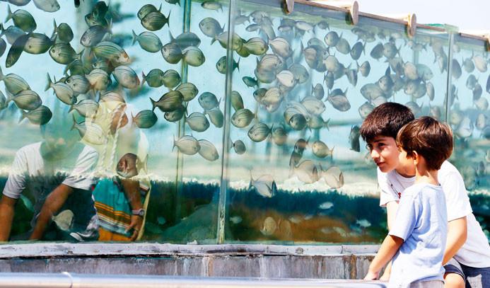 Bir balığın maliyeti 20 bin lira