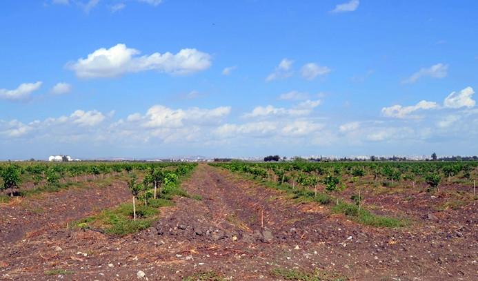Adana'da tarım açık cezaevi yapılacak