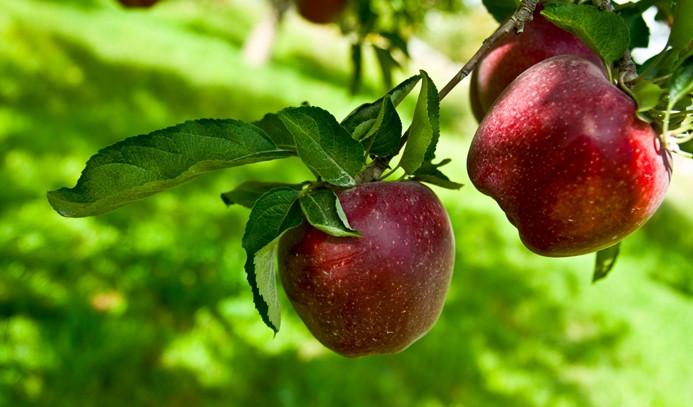 Elma fiyatında üretici ile market arasında yüzde 361 fark var