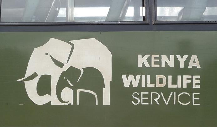 Kenya yurt dışına yılan satışını yasakladı