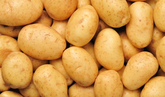 Patates ihracatına teşvik