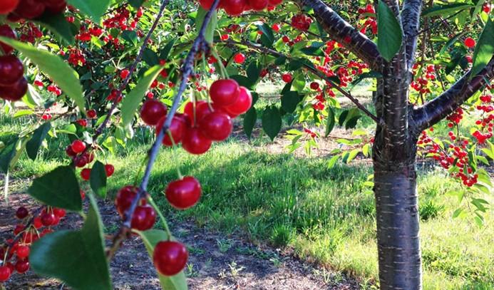 Ege'de yaş meyve sebze ihracatı yüzde 14 arttı