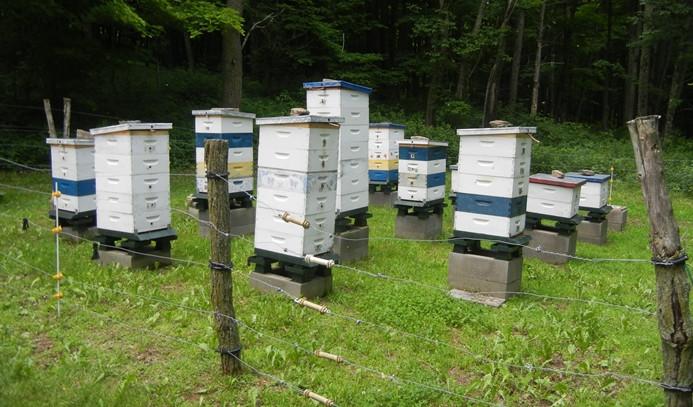 Yalancı bahar arı kolonilerini vurdu