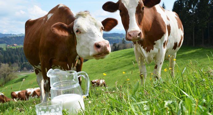 Süt zammı üreticiyi memnun etmedi