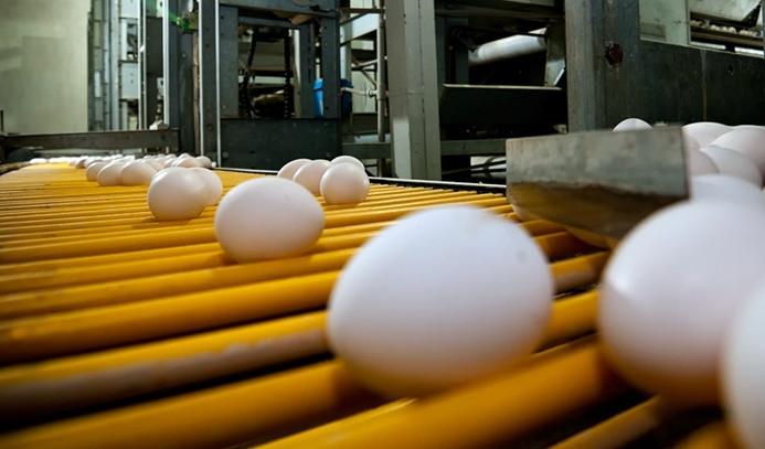 Yumurta üretimi kasımda azaldı