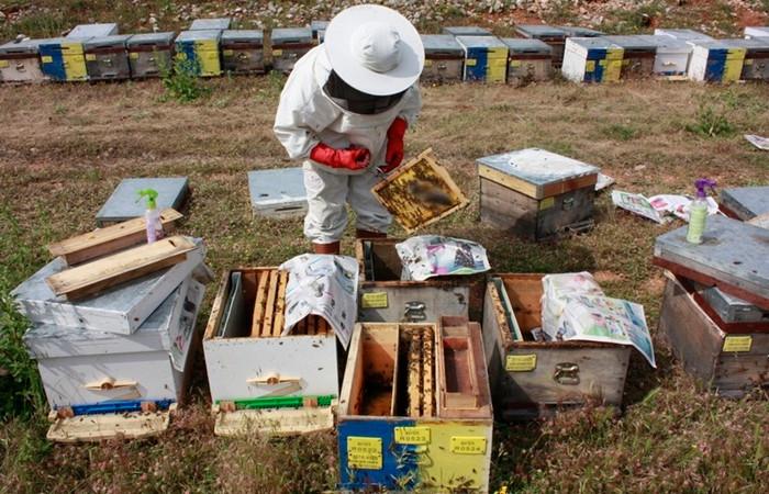 Arıcılık sektörüne can suyu 2 proje geliyor