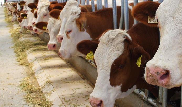 Canlı hayvan değeri yüzde 31 arttı