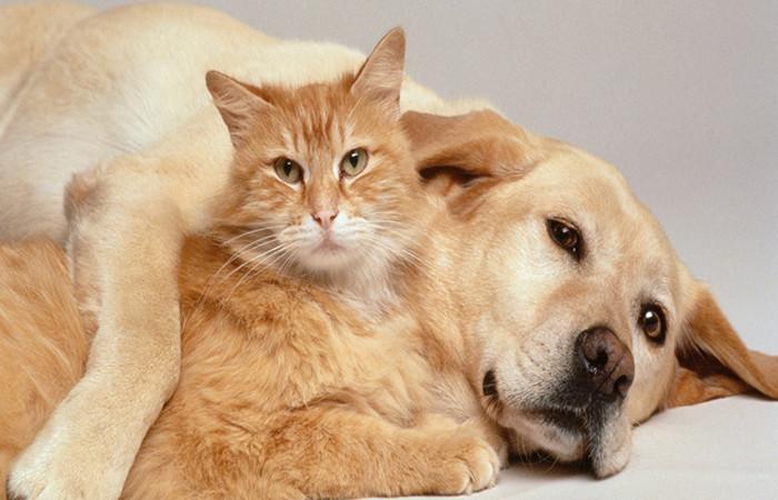 """Kedi ve köpeklere """"Mikroçipli"""" kimlik"""