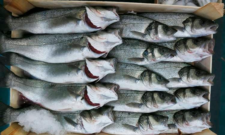 Bu sezon tutulan balık yüzde 60 azaldı