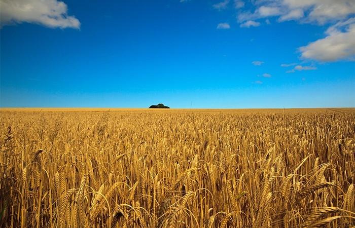 Bu yıl arpa eken buğday biçebilir
