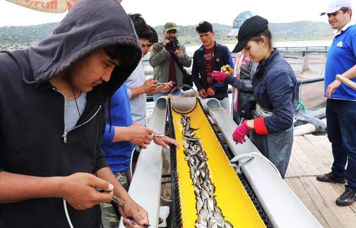 Okul harçlıkları için günde 50 bin balık aşılıyor