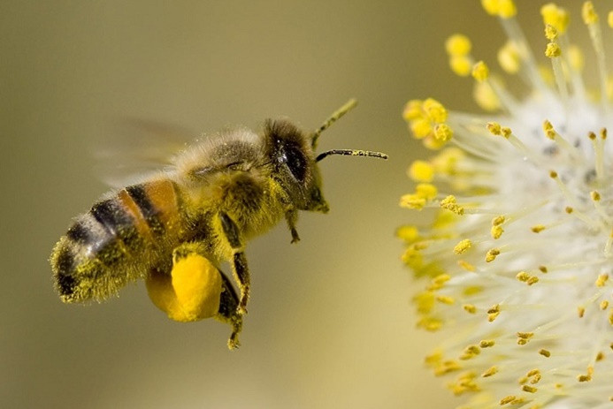 Organik arıcıya bakanlıktan destek