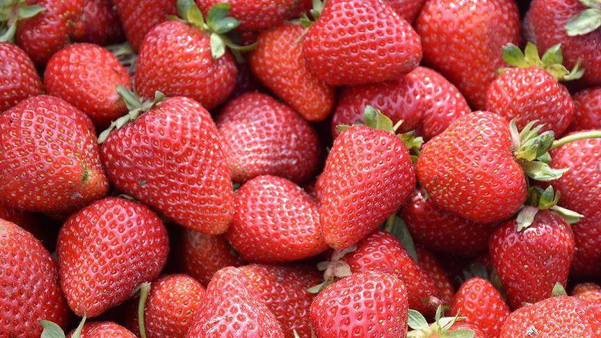 Meyve ihracatı ikiye katlandı