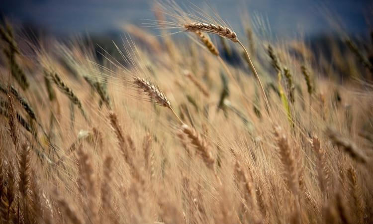 Tarım ve hayvancılığı ne bekliyor?