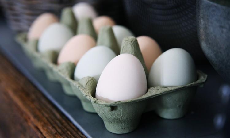 Yumurta fiyatındaki artış üreticiyi üzdü