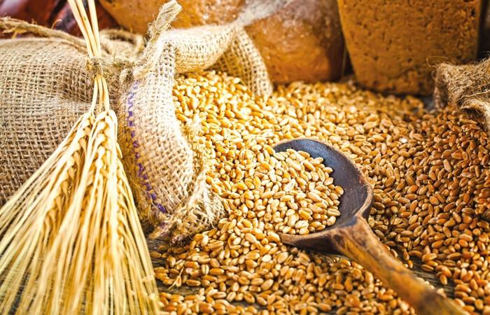 Tohumluk ihracatındaki başarının Ar-Ge ve kaliteli üretimle sürmesi hedefleniyor
