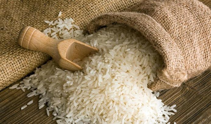 Konuralp pirincinde ekim zamanı