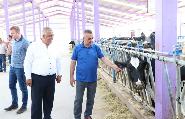 Devlet desteğiyle kurulan kooperatif yıllık 600 ton süt üretiyor