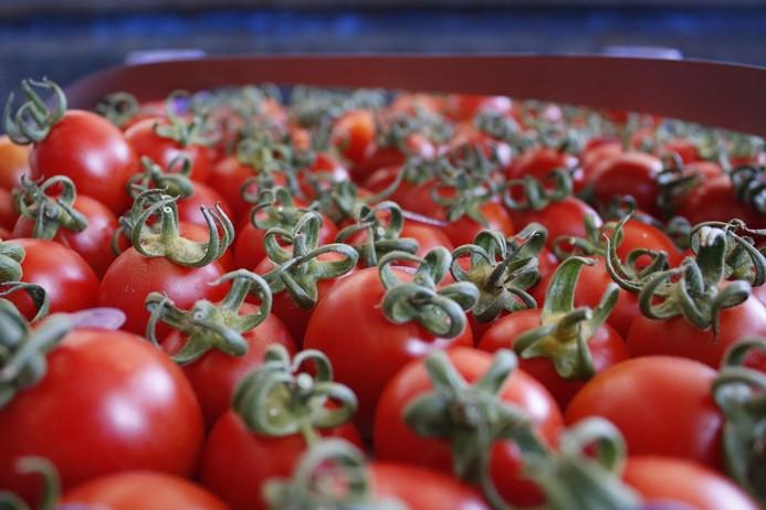 Rusya'ya domates ihracatındaki artış yüz güldürüyor