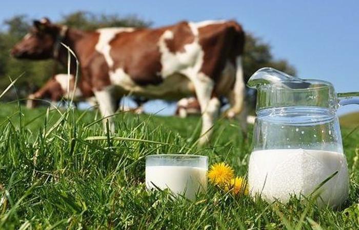 """""""Süt Konseyi'nin fiyat kararı, hayvancılığı krize sokacak"""""""