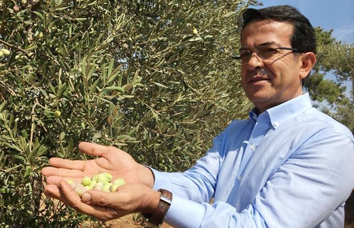 Zeytin Mektebi ile üretimin artması hedefleniyor