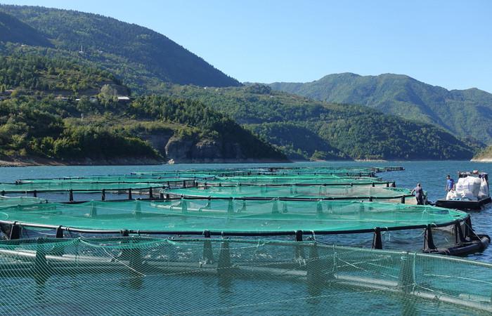 Borçka Baraj gölünde kafes balıkçılığı gelişiyor