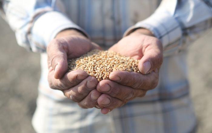 Göç nedeniyle tarımsal üretimde azalma yaşanıyor