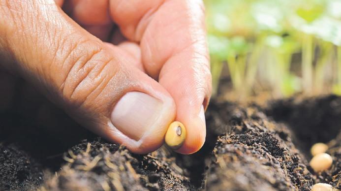 Koronavirüs etkisiyle yerli ve milli tohum kullanımı artacak