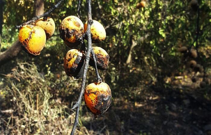 Mersin'de yaşanan afetler tarımsal üretimi olumsuz etkiledi