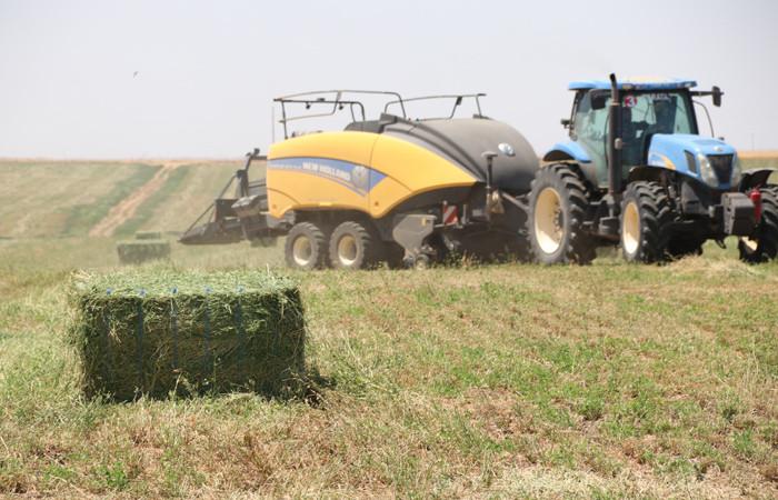 Sınırda yetiştirilen yoncada hasat zamanı