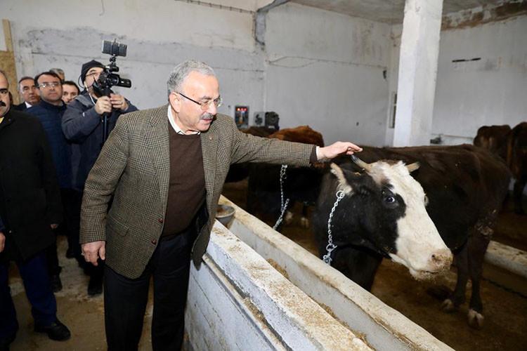 Türkiye'de ilk olma özelliğine sahip hayvan bakım ve kiralama oteli