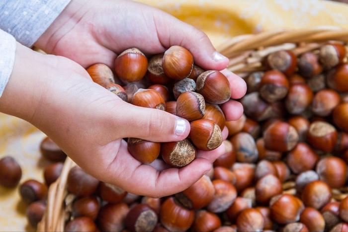 Çikolata sektöründeki daralmaya rağmen fındık ihracatı arttı